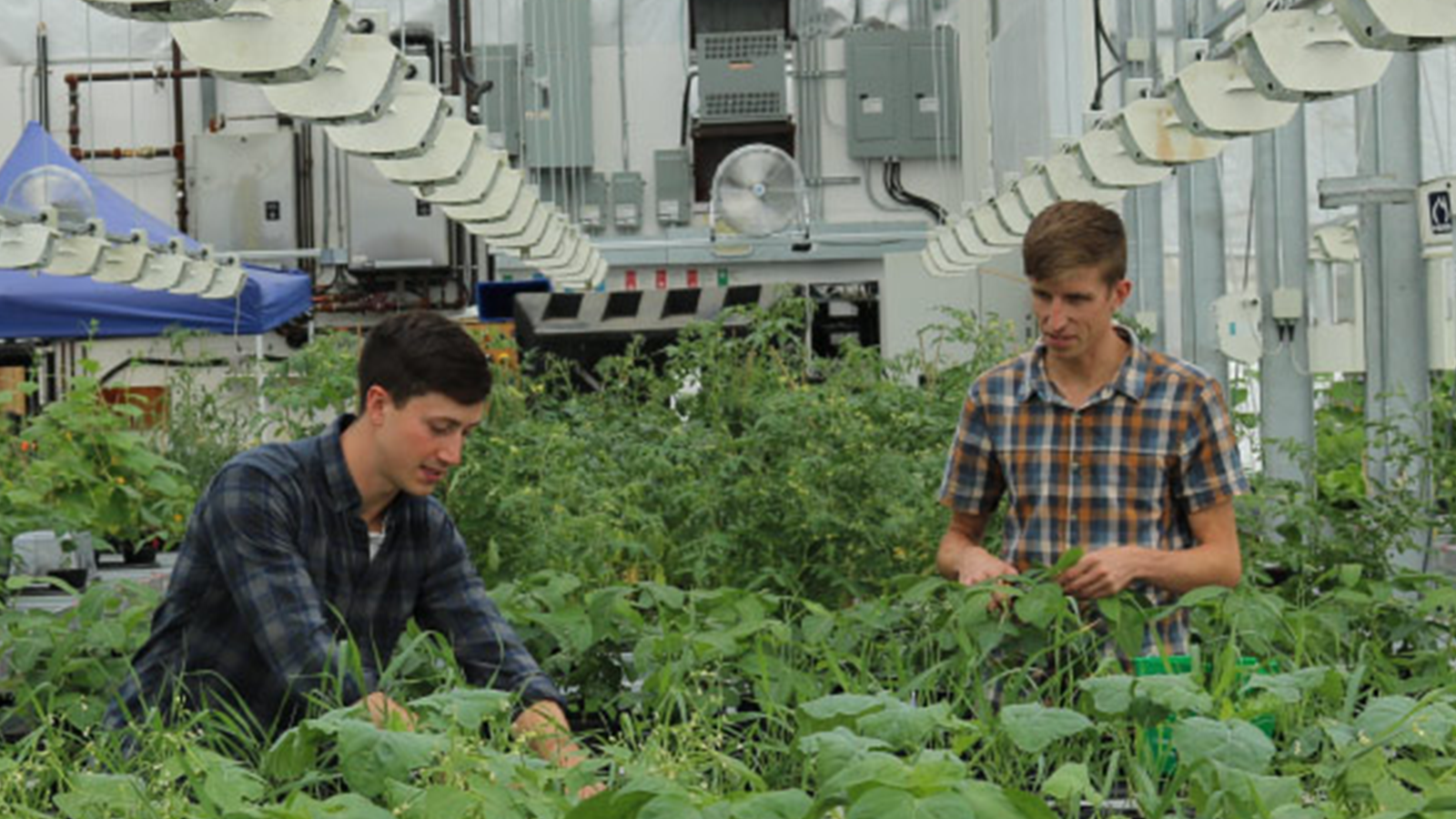 SFU + Terramera helping farmers grow more food with less pesticides
